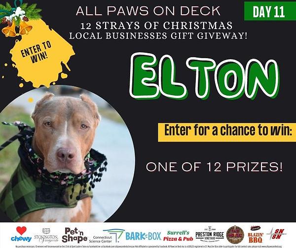 Day11 Elton.jpg