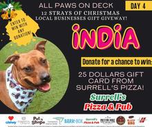 Day 4 INDIA WIX (1).jpg