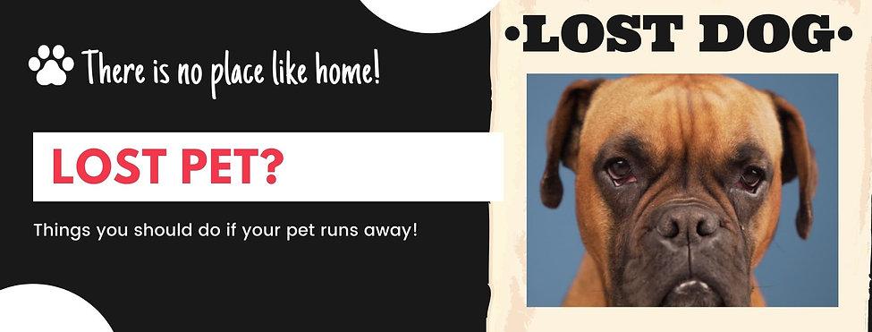 LOST PET.jpg
