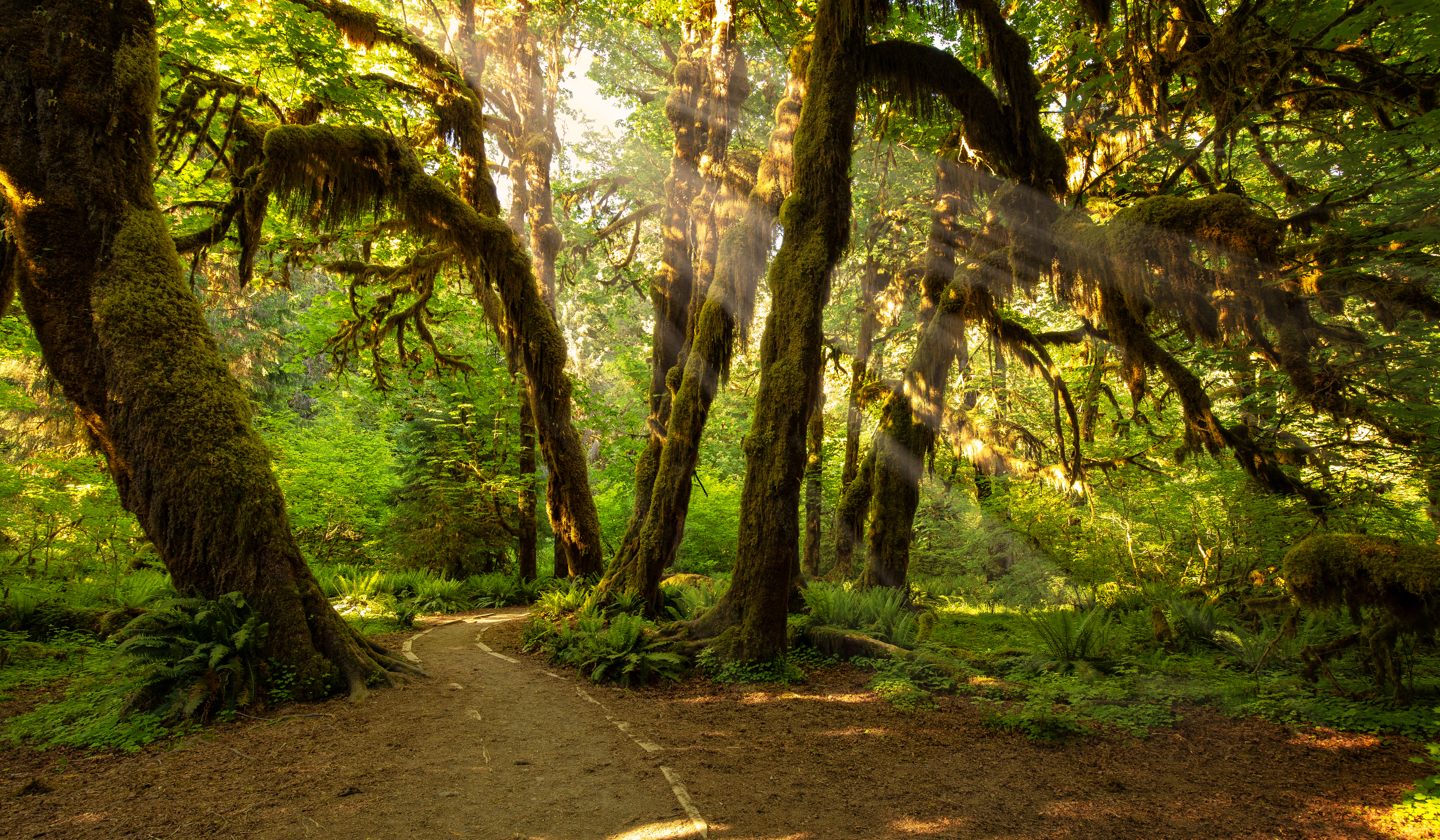 Hoh Rain Forest Light