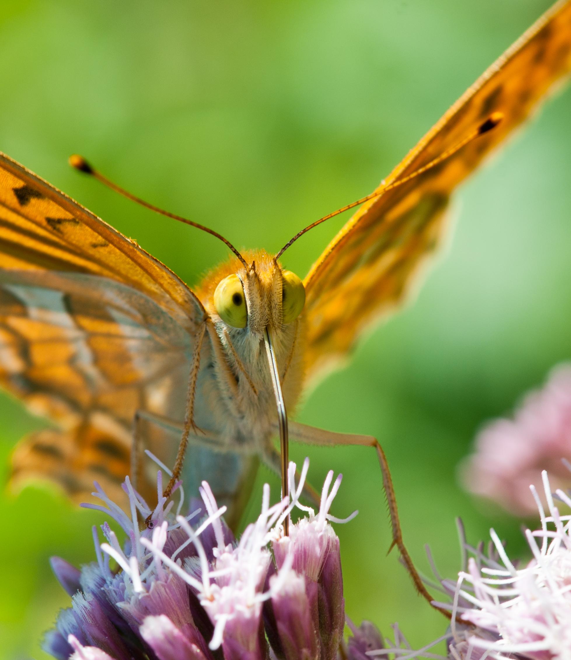 Butterfly_5978550221_o