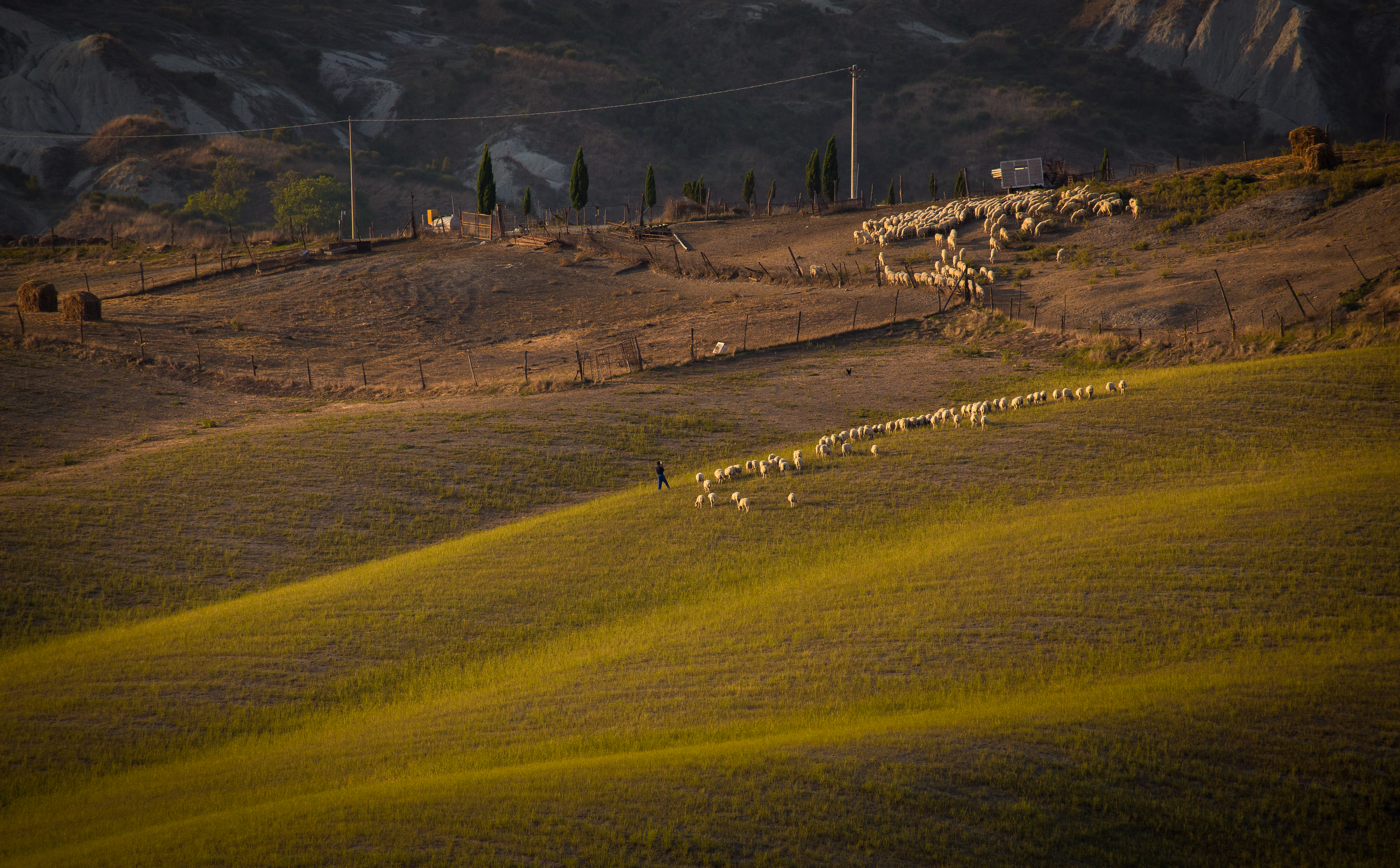 Tuscany and Sheep
