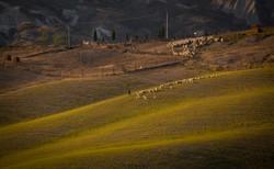 Tuscany and Sheep