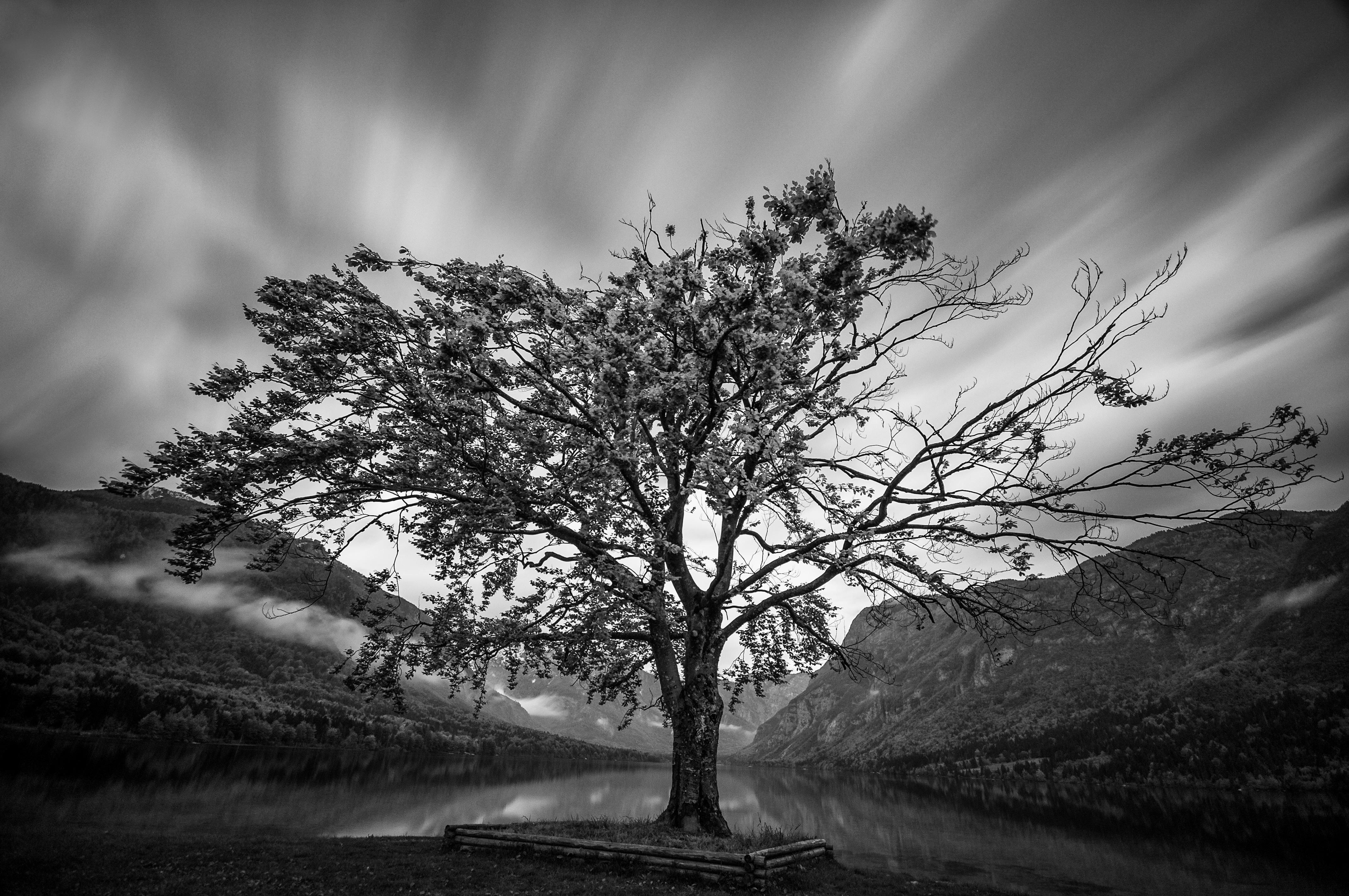 Bohinj Tree