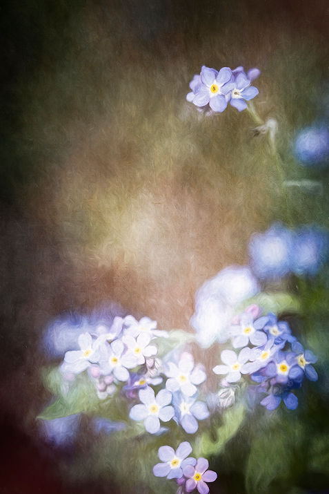 Forget Me Nots Small.jpg