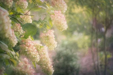 Pastel Flowers in Tennessee.jpg