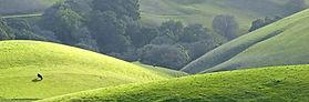 California Hills.jpg