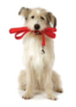 West Hartford dog walkers and doggy day care services