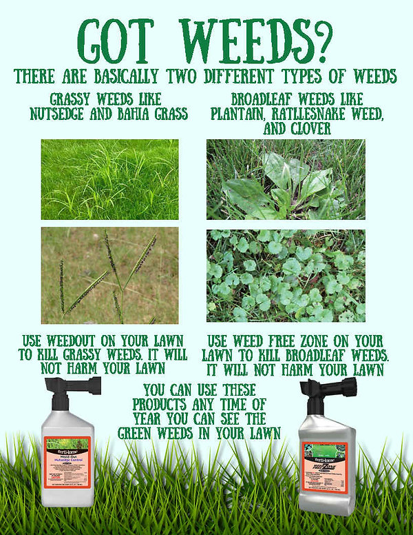 grassy broadleaf weeds.jpg