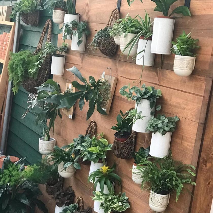 Plenty of Indoor Plants for your home
