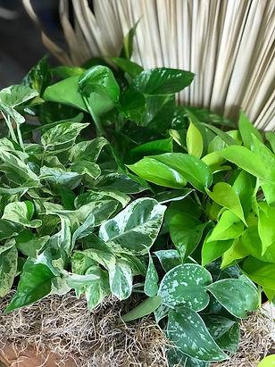 fronds-leaf-web.gif