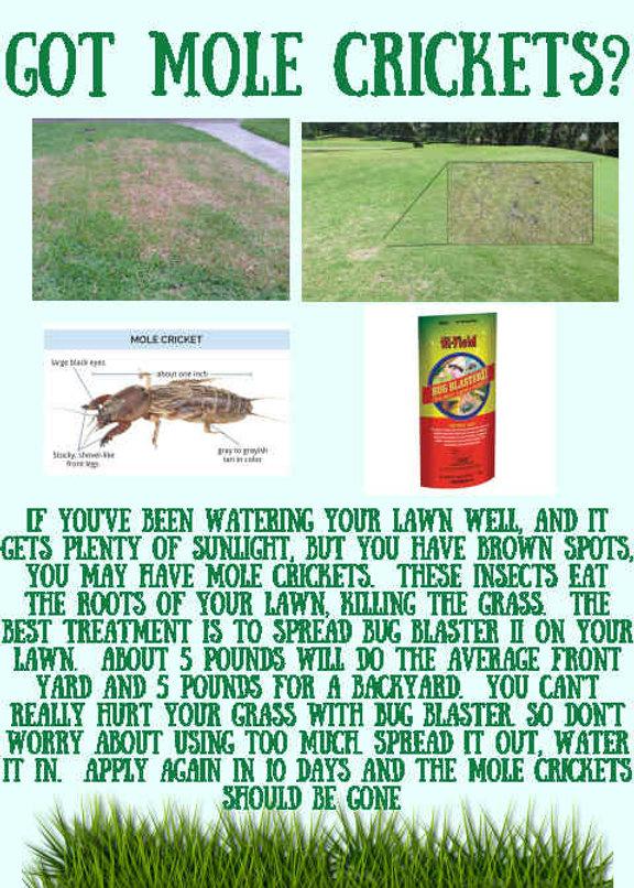Mole Crickets.jpg