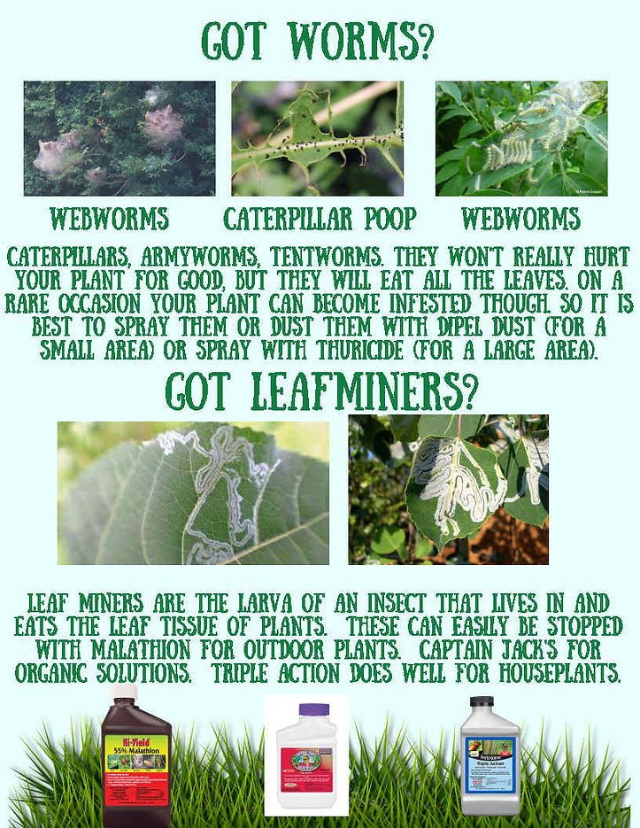Got worms or leaf miners.jpg