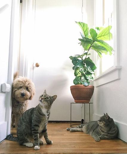 pet friendly image.jpeg