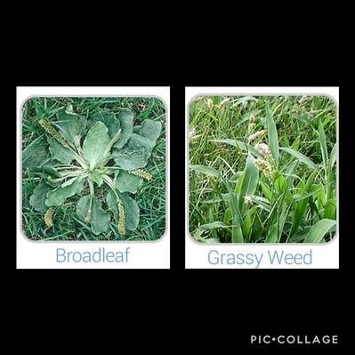 fronds-leaf-web2.gif