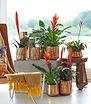 bromeliad image.jpg