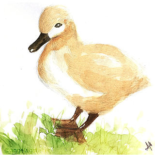 ©angelagstalter kidsillustration, childrensbookillustration, baby swan illustration, watercolour
