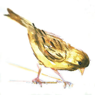 ©angelagstalter kidsillustration, childrensbookillustration,watercolour bird