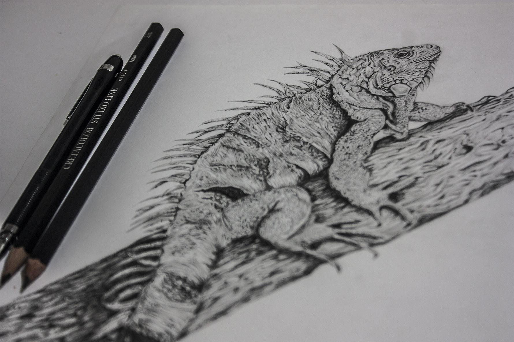 Iguana lapiz - Ricardo Macia