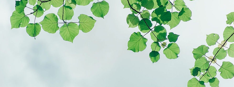 photography-of-leaves-under-the-sky.jpg