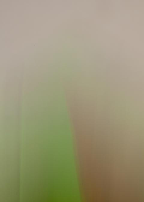 cloth33.wix3.png