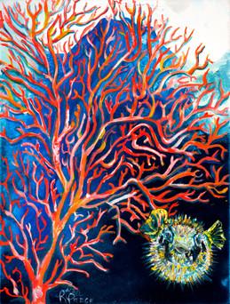 Pufferfish By Coral.jpg