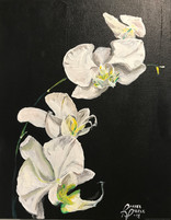 OrchidsWeb.jpg