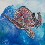 Diving Turtle.jpg