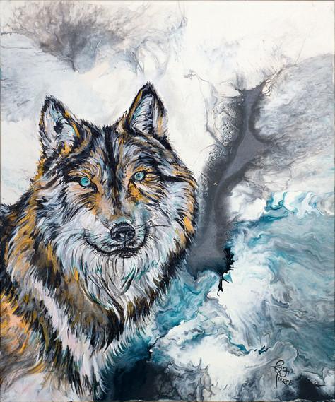 Shy Wolf.jpg
