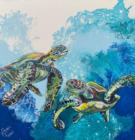Captiva Twin Turtles.JPG