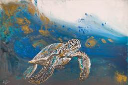 Deep Water Sea Turtle.jpg