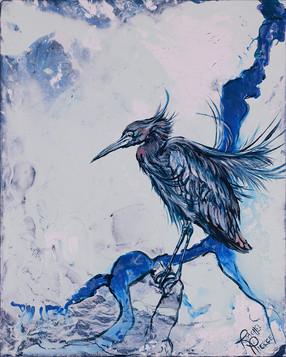 Little Blue Heron at Ding