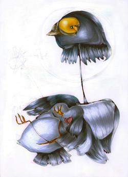 Headless Pigeon