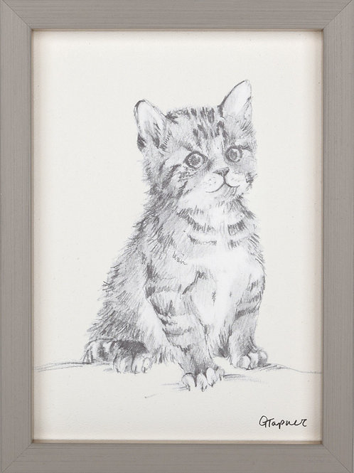 Paws for Thought - Framed Print