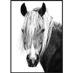 Mane Man - Frame Canvas Print