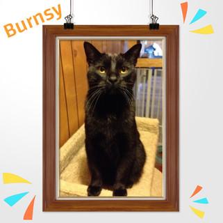Burnsy