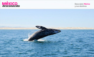¿Te gustaría ver la temporada de ballenas en México?