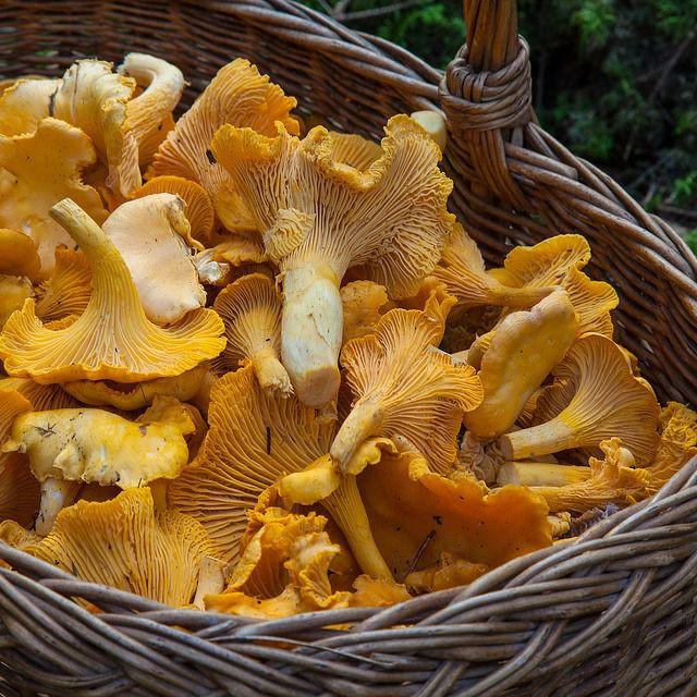 Wild Mushroom Camp - Salt Point State Park