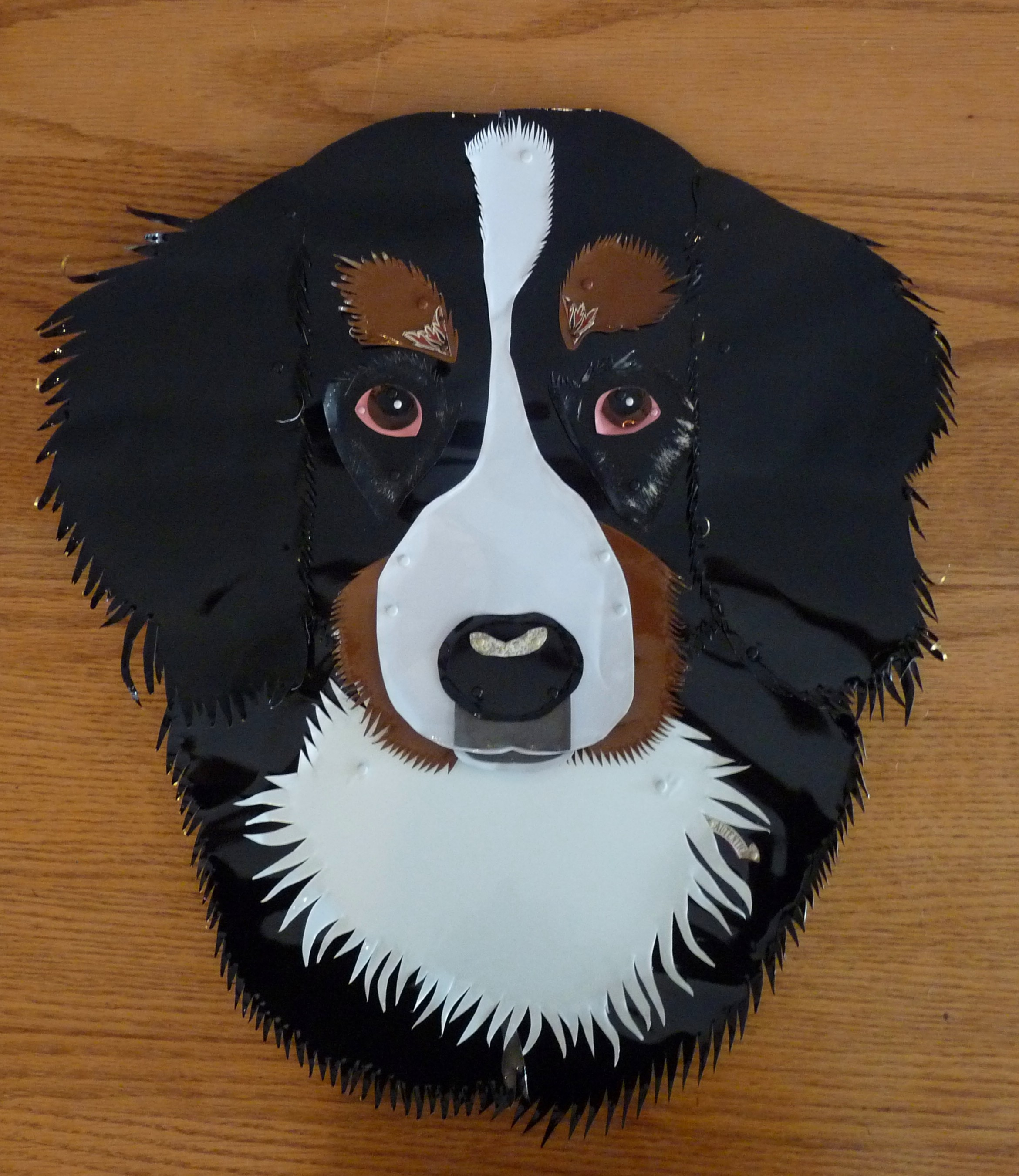 Carini, Bernese Mountain Dog