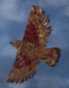 hawk cropped.jpg