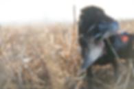 Zoom doug duck.png