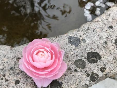 釜山の春の花風景