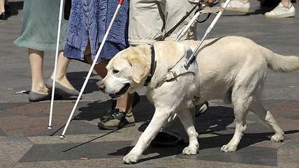 Blindengeleidehond WéViGé