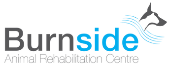 Burnside-Logo.png