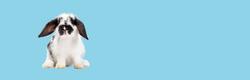 dog hyrdotherapy