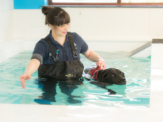 veterinary_hydrotherapy.jpg