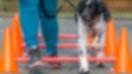 Dog_Physio_2.jpg