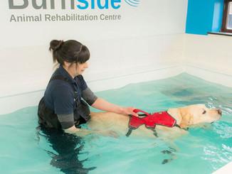 Animal_dog_swimming.jpg