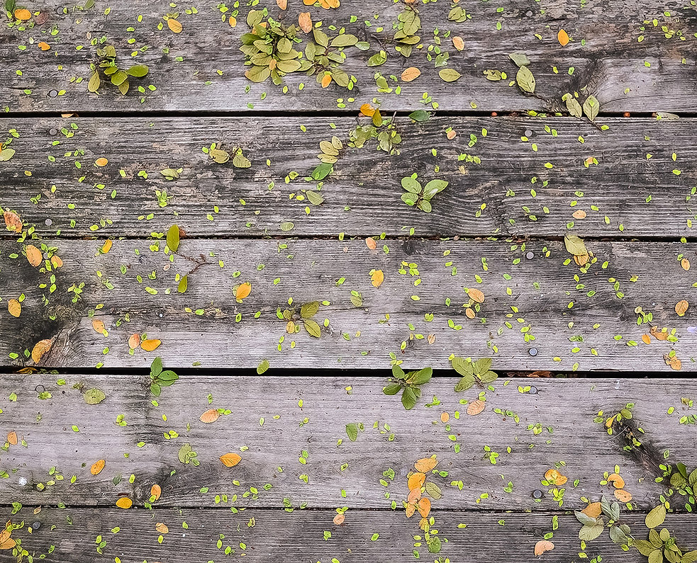 Wooden Boards with leaves