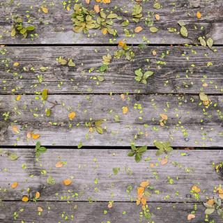 Blommor på Wood